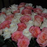 розы :: Снежанна Снежка