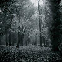 Осень в парке :: Виктор Перякин