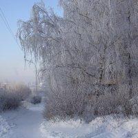 Был сильный мороз. :: Елизавета Успенская