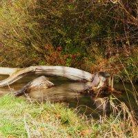 Осень :: Edvard Heim