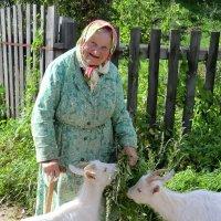 Бабушка и козы... :: Владимир Павлов