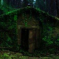 Сказочная избушка на окраине Зеленогорска :: Евгения Сказка