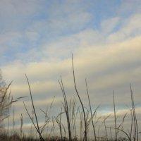 Последние дни осени :: Елизавета Ханаева
