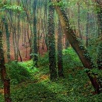 Волшебный лес :: Николай Курганов