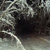 Ночная дорога в лесу :: Валерий Щербаков