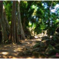 Дорога к храму. Ангкор. Камбоджа. :: Сергей Калиновский