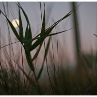 Предрассветная луна :: Ольга Скопец