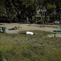 Детская площадка :: Сергей Наумов