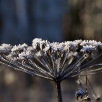 Crystal Frost :: Андрей Алексеев