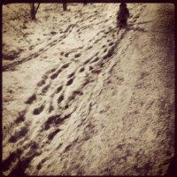 первый снег был самым черным :: Антон Гордовый