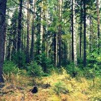 лес :: Татьяна Бурухина