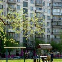 Во дворе весной :: Александр Садовский
