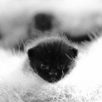 Ну снимите меня! :: Павел Гриценко