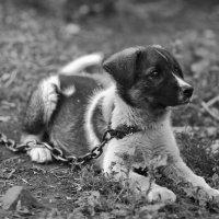 Собачье детство :: Павел Гриценко