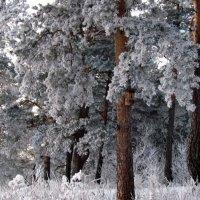 Зима :: Жанна Мальцева