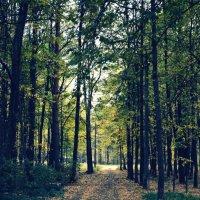 лес :: Zlata Tsyganok