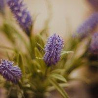 цветы :: Людмила Габибуллаева