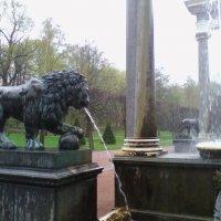 Один из многочисленных львов Петербурга :: Екатерина Чернышова
