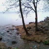 Ручей, впадающий в Финский залив :: Екатерина Чернышова