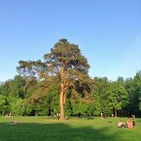 Одинокое дерево :: Ирина Бирюкова