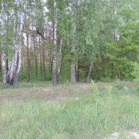 Лес весной :: Владимир Циганенко