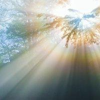 Лучик солнца :: Алексей Сазонов