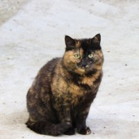 кошки :: Светлана ~~~