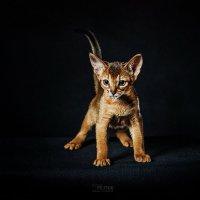Во мне сейчас живет - не кот! ))) :: Сергей Пилтник