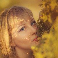 Солнечное :: DmitryLis
