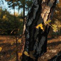 Ранняя осень :: Мила Борисова