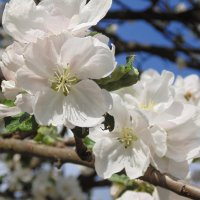 Цветут цветы :: Игорь Чичиль