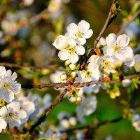 Весна :: Алёна Я