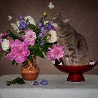Кися и цветы 2 :: kram