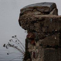 и на камнях растут деревья :: Константин Нестеров