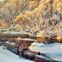 морозное утро :: Владимир Матва