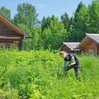Первая зелень :: Валерий Талашов