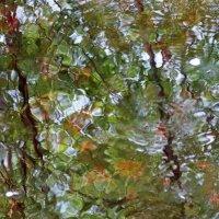 Речка Руя. Водный витраж. :: Владимир Гилясев