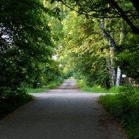 дорога в лето :: Ольга Рывина