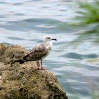 птица :: Ольга Рывина