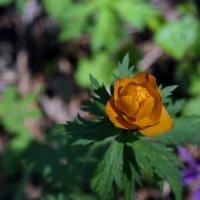 Лесной огонёк :: Виолетта
