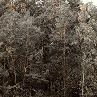 Осенний лес :: Николай