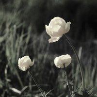 цветок :: sv.kaschuk