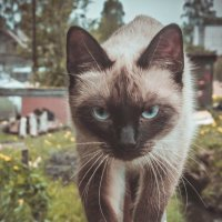 cat 3 :: Arina Kekshoeva