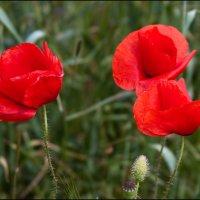 Самый выигрышный цветок :: Михаил Розенберг