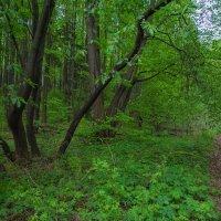 Весенняя зелень :: vladimir