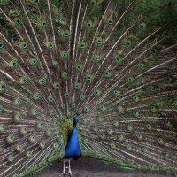 Птичка :: Виолетта