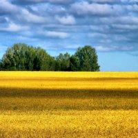 хлебное поле :: Евгений Фролов