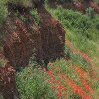 Маковые склоны :: Андрей Lyz