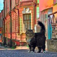 Босс города Выборг :: Олег Малянов