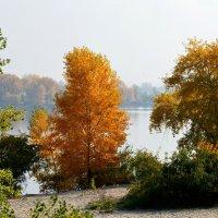 Осень в Киеве :: Наталия Лыкова